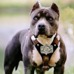 Tiltott kutyaviadalra csaptak le a terrorelhárítók