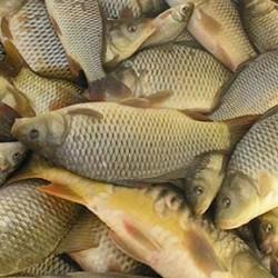 Fürdőgatyában beült a halakhoz a Tescóban – videó