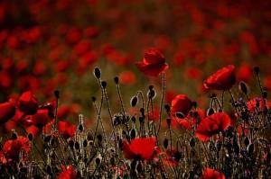 Virág pszichológia, a kedvenc virágod elmondja milyen vagy