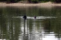 megfulladt