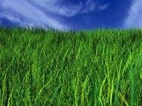 Zöldterület